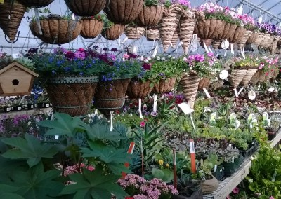 gardencenter0618