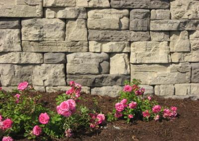 Rosetta Belvedere, Ozark Blend